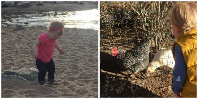 beach & chickens
